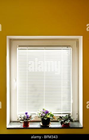Horizontal blinds on window with three houseplants - Stock Photo