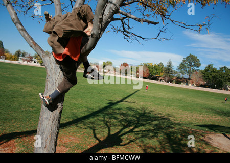 seven year old  boy climbing a tree in a park - Stock Photo