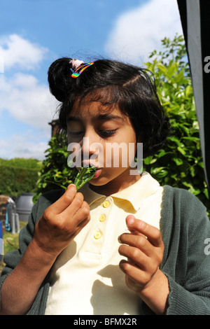 Children visit allotments from local schools, Bradford - Stock Photo