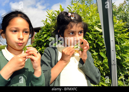 Children sample broccoli during a  visit to allotments from local schools, Bradford - Stock Photo