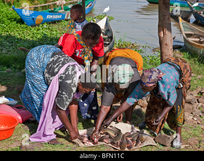 Kenya, Nyanza District. Women sort the days catch of cat fish landed at Dunga Beach by fishermen on Lake Victoria. - Stock Photo