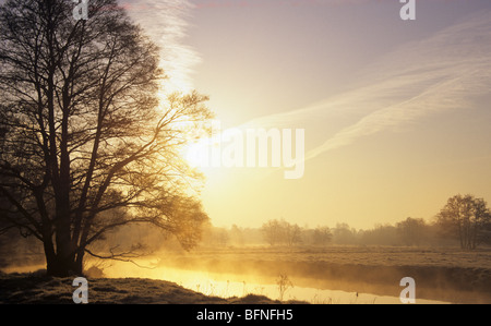 Beautiful tranquil scene in countryside with Oak tree at sunrise and mist on River Wey after overnight frost in - Stock Photo