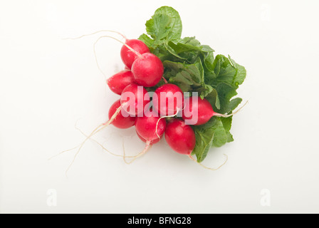 A bunch of fresh, red radishes. - Stock Photo