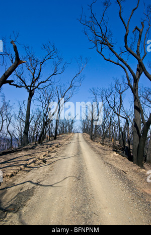 A dirt road runs along a mountain top amidst burnt schlerophyl forest. - Stock Photo