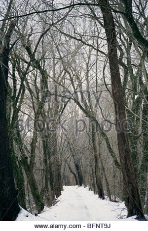 Early winter snow on the C and O Canal. - Stock Photo