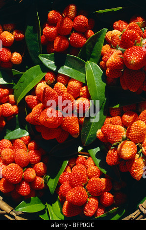 Fresh Red Strawberries with leaves for sale in the street of