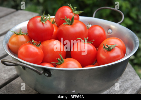 A pile of Organic tomatoes from the garden - Stock Photo