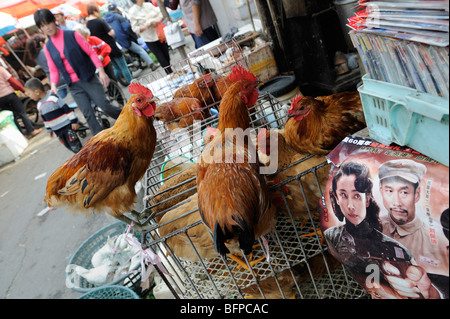 Live chickens are on sale at market in Shanghai, China. 16-Oct-2009 - Stock Photo