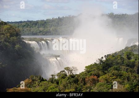 Great Dusky Swifts (Cypseloides senex) flock emerging from roost behind waterfalls, Iguazu, Argentina - Stock Photo
