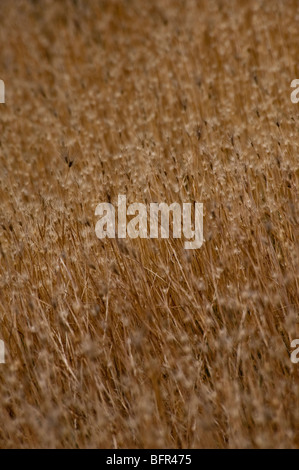 Selective focus on dry grass - Stock Photo