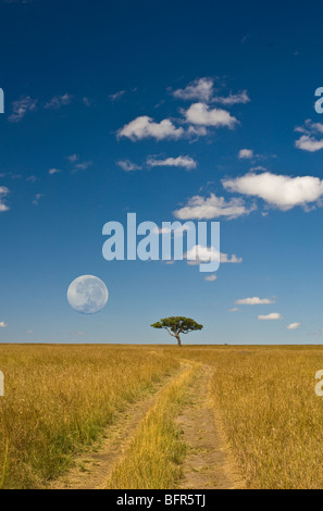A lone tree on the horizon with a jeep track leading towards it. Full moon digitally manipulated overhead. - Stock Photo