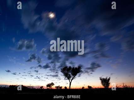 Sunset with silhouetted shrubs and blurred moon behind grey clouds in motion - Stock Photo