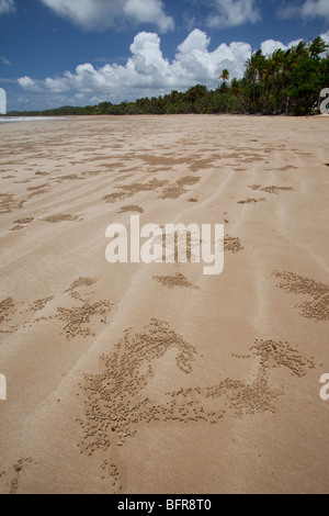 Ghost crab burrows, Mission Beach, near Cairns, Queensland, Australia - Stock Photo