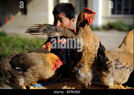 Live chickens are on sale at market in Congming county, Shanghai, China. 16-Oct-2009 - Stock Photo