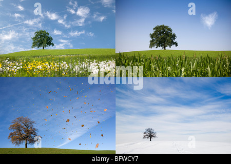 oak tree on hill in four seasons - Stock Photo