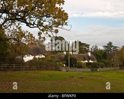 Swan Green New Forest Hampshire UK - Stock Photo