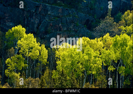 Aspens and birches with emerging foliage at base of cliff overlooking Onaping River, Greater Sudbury, Ontario, Canada - Stock Photo