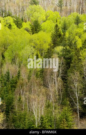 Aspens and birches on hillside, from high viewpoint, Greater Sudbury, Ontario, Canada - Stock Photo