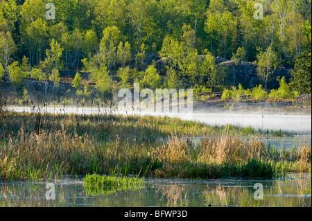 Morning mists in spring beaver pond, Greater Sudbury, Ontario, Canada - Stock Photo