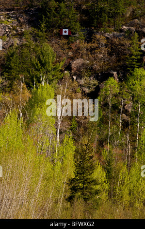Aspens with emerging foliage at base of cliff with Canadian Flag, Greater Sudbury, Ontario, Canada - Stock Photo