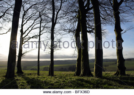 Wiltshire countryside in winter, looking west from near Baydon village, UK. - Stock Photo