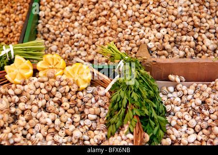 Live edible snails, Palermo food market, Sicily - Stock Photo