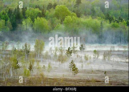 Spring forests on hillsides with morning mists in valley bog, Greater Sudbury, Ontario, Canada - Stock Photo