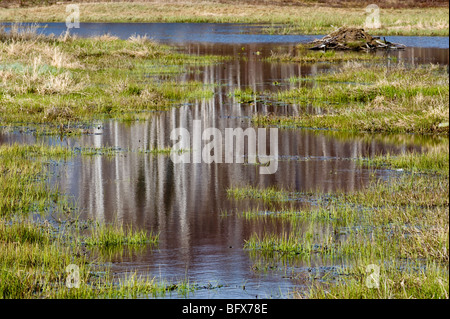 Reflections in beaverpond water channel in early spring, Greater Sudbury, Ontario, Canada - Stock Photo
