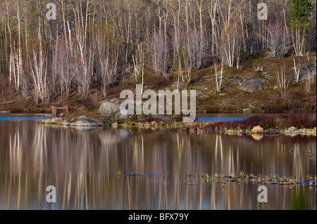Birch tree reflections in beaverpond in early spring, Greater Sudbury, Ontario, Canada - Stock Photo