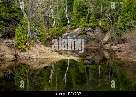 Spring tree reflections in Wanapitei River, Greater Sudbury, Ontario, Canada - Stock Photo