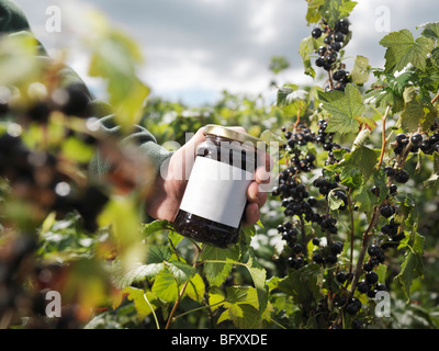 Man With Blackcurrant Jam In Field - Stock Photo