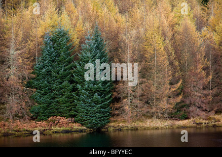 Forestation on the West Shore of Oude Dam, Argyll & Bute, Scotland - Stock Photo