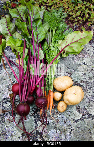 Organic vegetables from home garden - Stock Photo