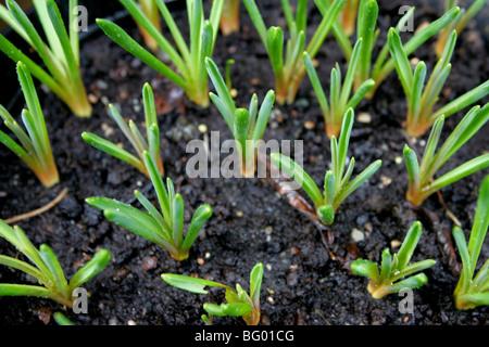 Green shoots - Stock Photo