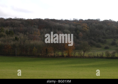 Chiltern Hills near Watlington Oxfordshire - Stock Photo