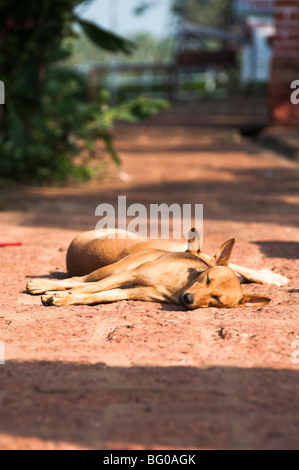 Two Sleeping Dogs - Stock Photo