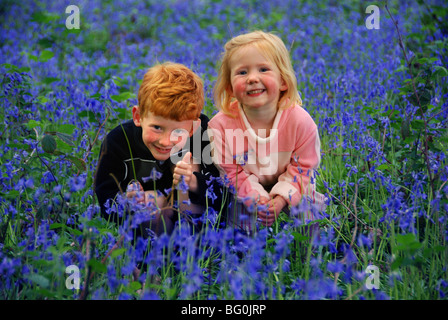 English bluebells in ancient deciduous woodland - Stock Photo
