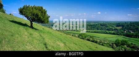 Summer view south with box tree from Box Hill, North Downs, Surrey Hills, Surrey, England, United Kingdom, Europe - Stock Photo