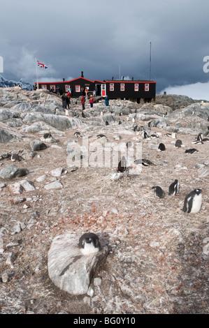 British Base and Post Office, Port Lockroy, Antarctic Peninsula, Antarctica, Polar Regions - Stock Photo