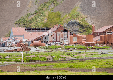 Fur seals in front of Old Whaling station at Stromness Bay, South Georgia, South Atlantic - Stock Photo