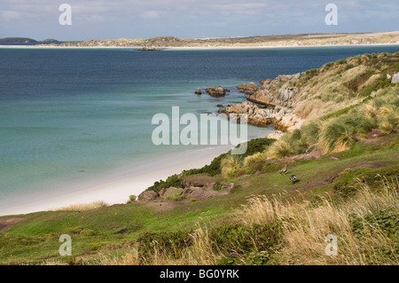Gypsy Cove, Yorke Bay, Port Stanley, Falkland Islands, South America - Stock Photo