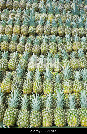 Harvested organic pineapples, Costa Rica, Central America - Stock Photo