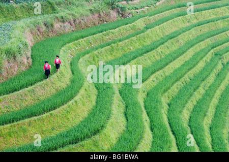 Yao women at the Dragons Backbone rice terraces, Longsheng, Guangxi Province, China, Asia - Stock Photo