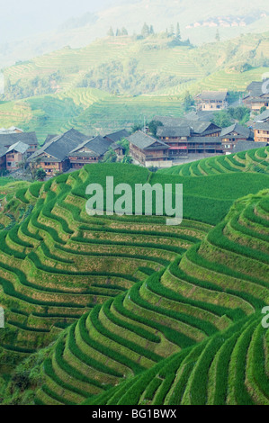 Dragons Backbone rice terraces, Longsheng, Guangxi Province, China, Asia - Stock Photo