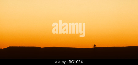 A lone camel and its rider at sunset on the desert near the Pyramids, Giza, Egypt - Stock Photo