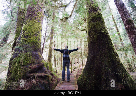 A hiker in the old growth forest at Carmanah Walbran Provincial Park, Vancouver Island, British Columbia, Canada, - Stock Photo