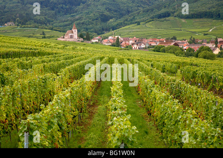 Vineyards and villages along the Wine Route, Alsace, France, Europe - Stock Photo