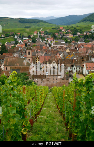 View over the village of Riquewihr and vineyards in the Wine Route area, Alsace, France, Europe - Stock Photo