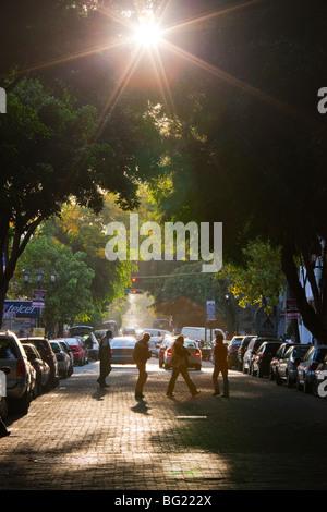 Tree lined street in the Zona Rosa in Mexico City - Stock Photo