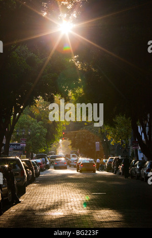 Tree lined street in the Zona Rosa in Mexico City - Stock Photo